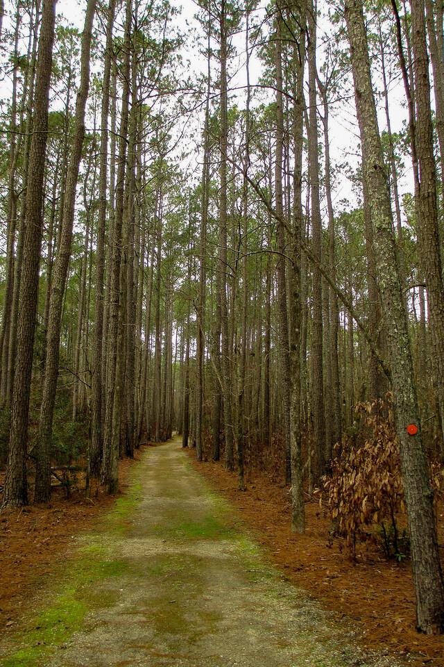 Ivey Gut Trail