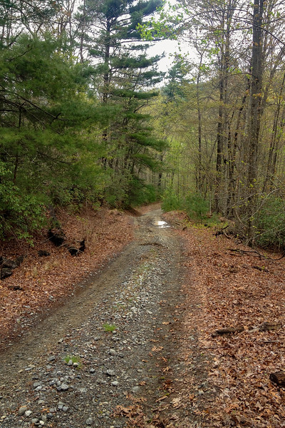 Chestnut Mountain Road