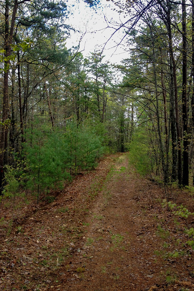 Cow Trail