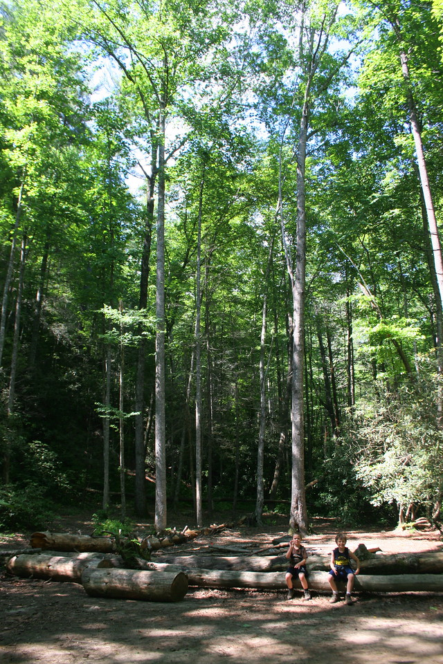 Another large group campsite sits alongside the trail in a beautiful wooded glade about a half mile from Rainbow Falls...
