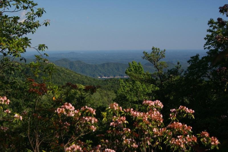 Grassy Ridge View