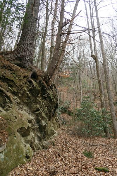 Wintergreen Trail -- 1,700'