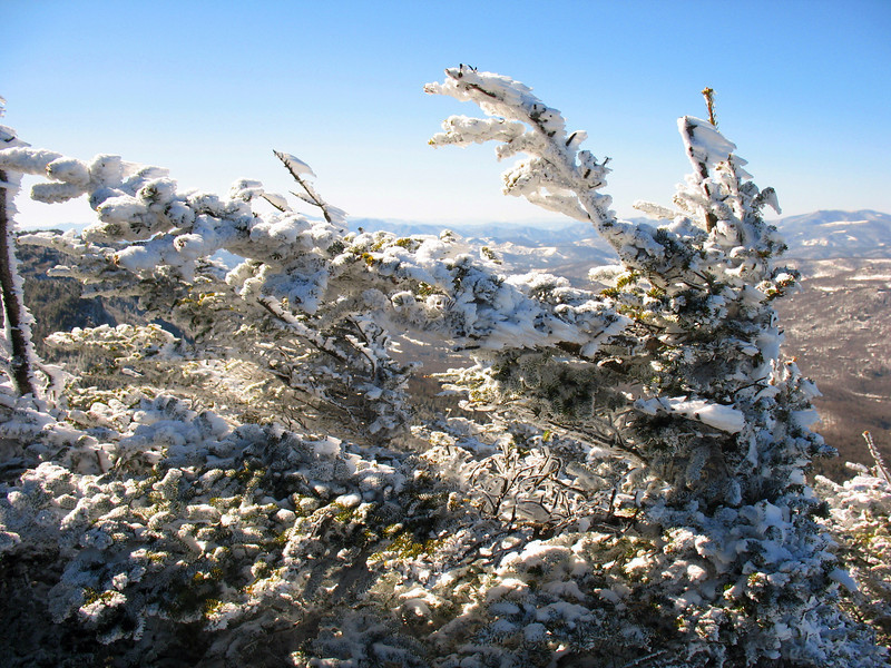 A rime coated pine at Watauga View. I thought it was cold at the summit. Watauga View was open and facing the wind!
