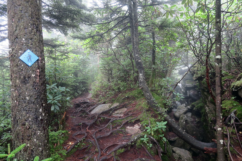 Grandfather Trail -- 5,700'