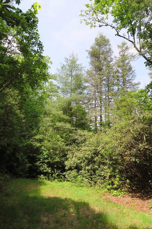 Graveley Falls 'Trail'