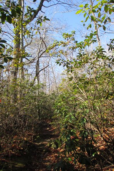 Tory's Den Trail - 1,820'