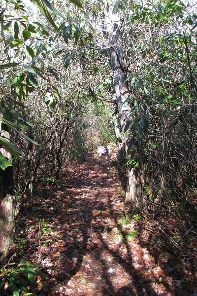 Magnolia Springs Trail - 1,730'