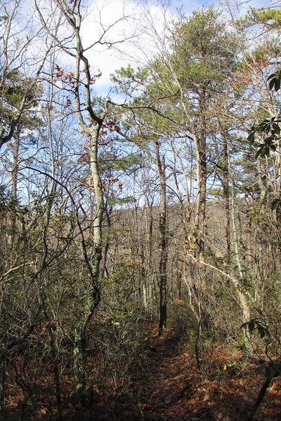 Magnolia Springs Trail - 1,950'