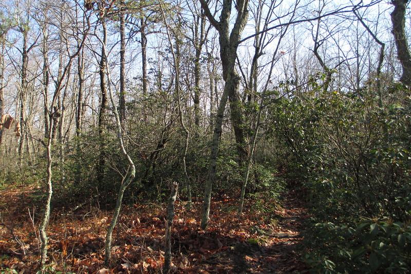 Tory's Den Trail - 1,980'