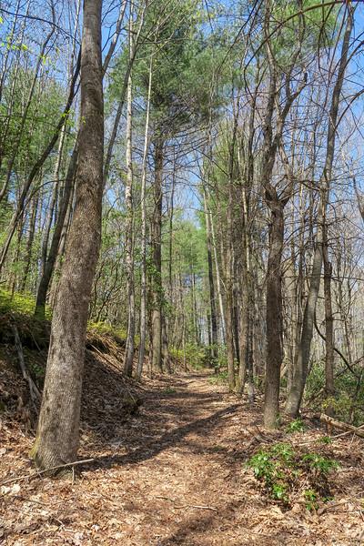 Gordon Mountain Spur Trail -- 2,950'