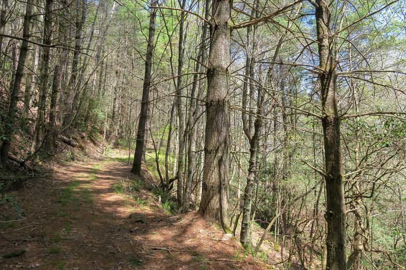 Gordon Mountain Road -- 2,780'
