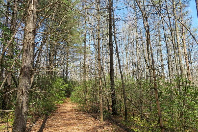 Gordon Mountain Road -- 2,680'