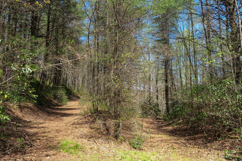 Gordon Mountain Road -- 2,820'