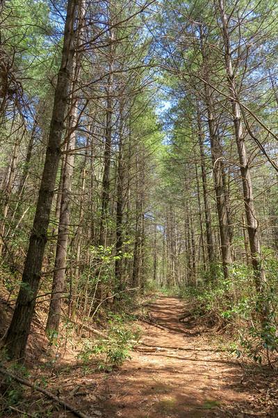 Gordon Mountain Road -- 2,730'