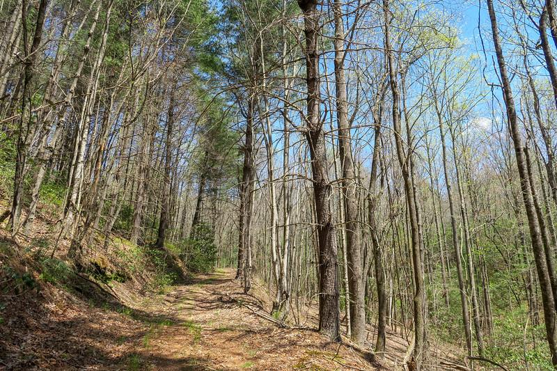 Gordon Mountain Road -- 2,800'