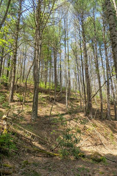 Gordon Mountain Road -- 2,790'