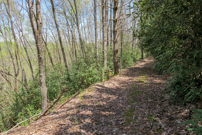 Gordon Mountain Road -- 2,860'