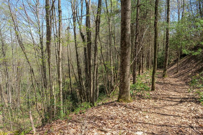 Gordon Mountain Spur Trail -- 2,900'