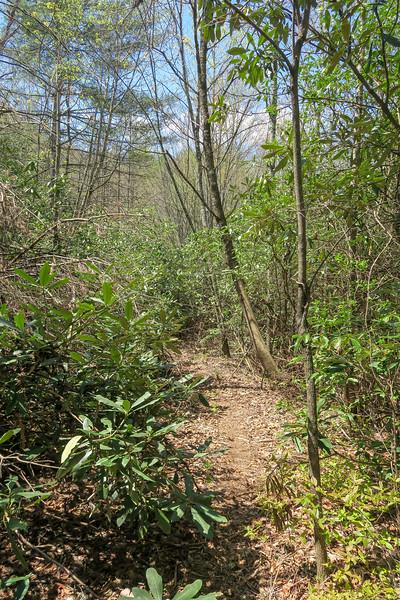 Gordon Mountain Road -- 2,770'