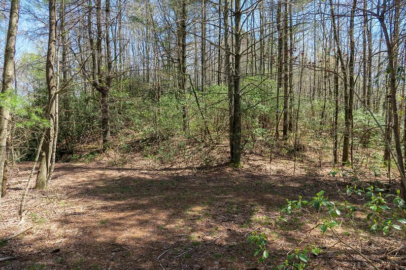 Gordon Mountain Road/Gordon Mountain Spur Trail Junction -- 2,870'