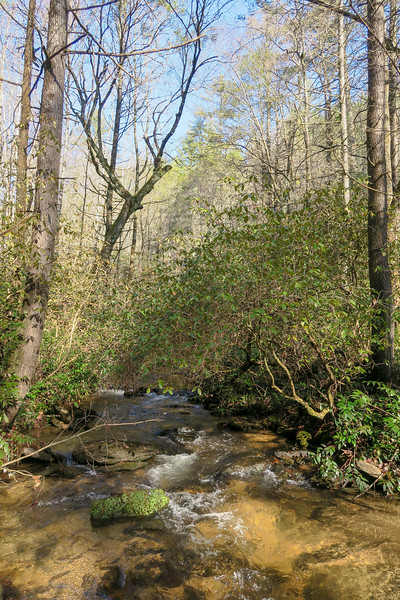 East Fork French Broad River -- 2,500'