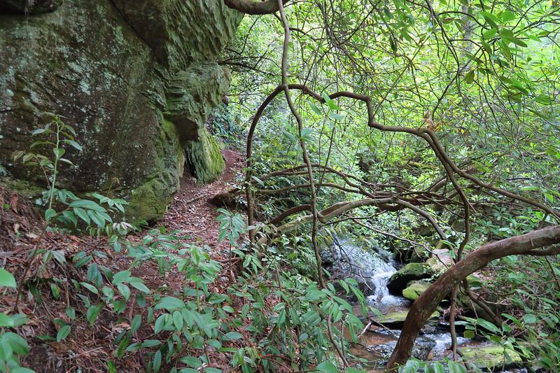 Reece Place Falls Path -- 2,580'