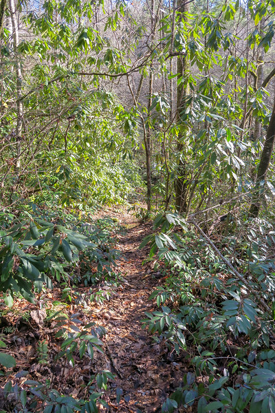 Falls Path -- 2,540'