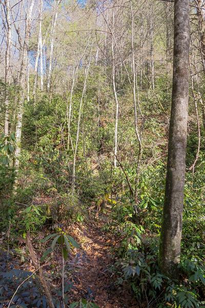 Reece Place Falls Path -- 2,540'