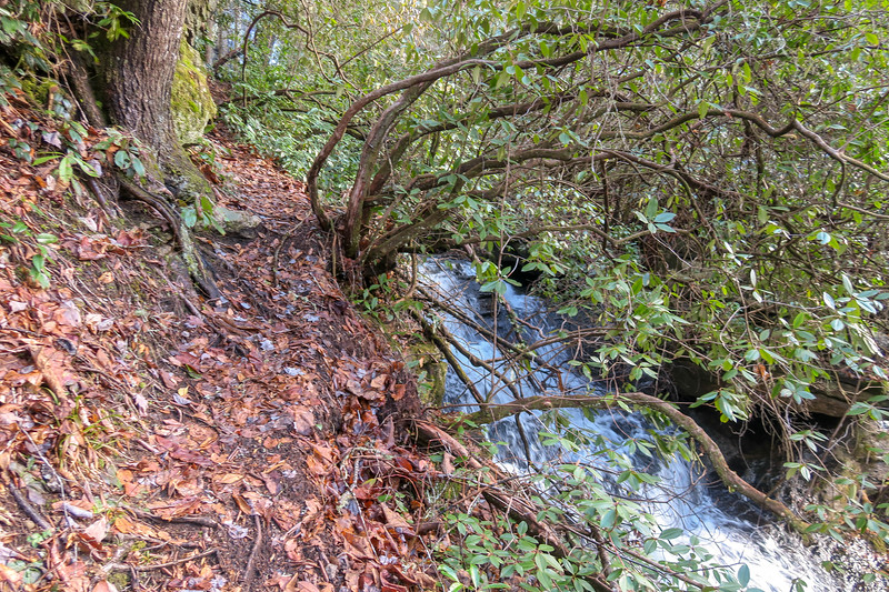 Reece Place Falls Path -- 2,560'
