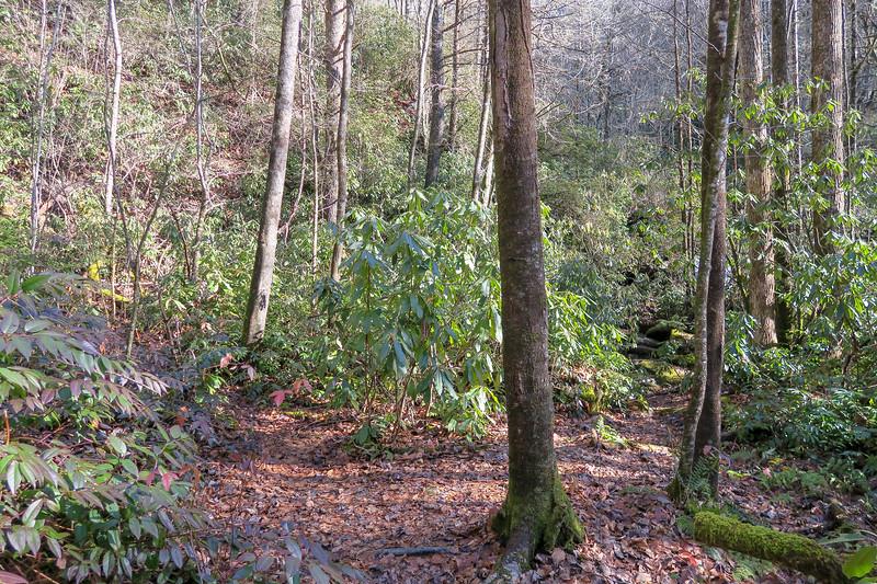 Reece Place Falls/Lower Falls Path Split -- 2,530'