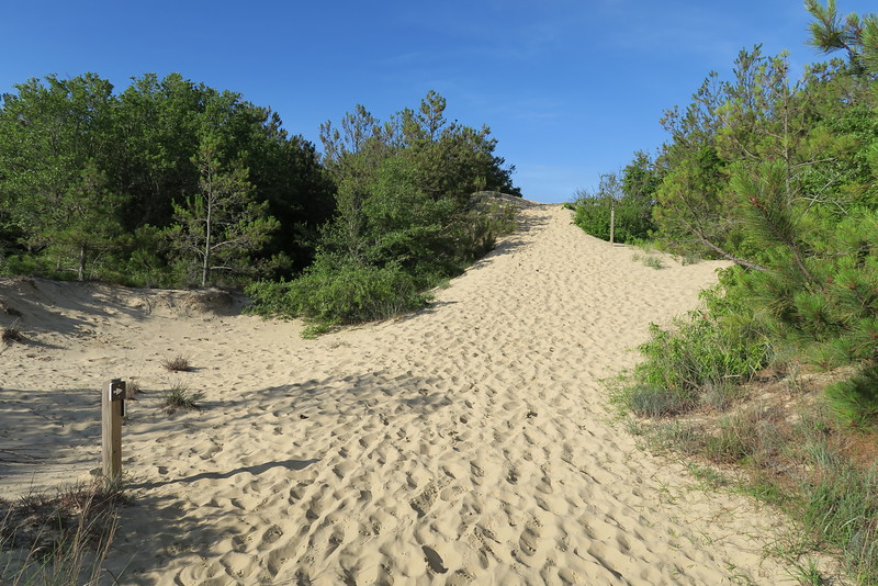 Tracks in the Sand Trail