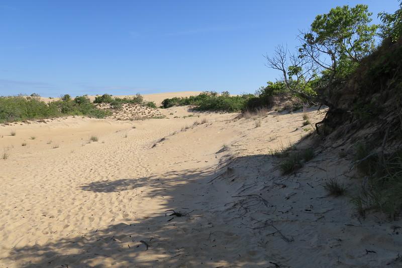 Soundside Natural Trail