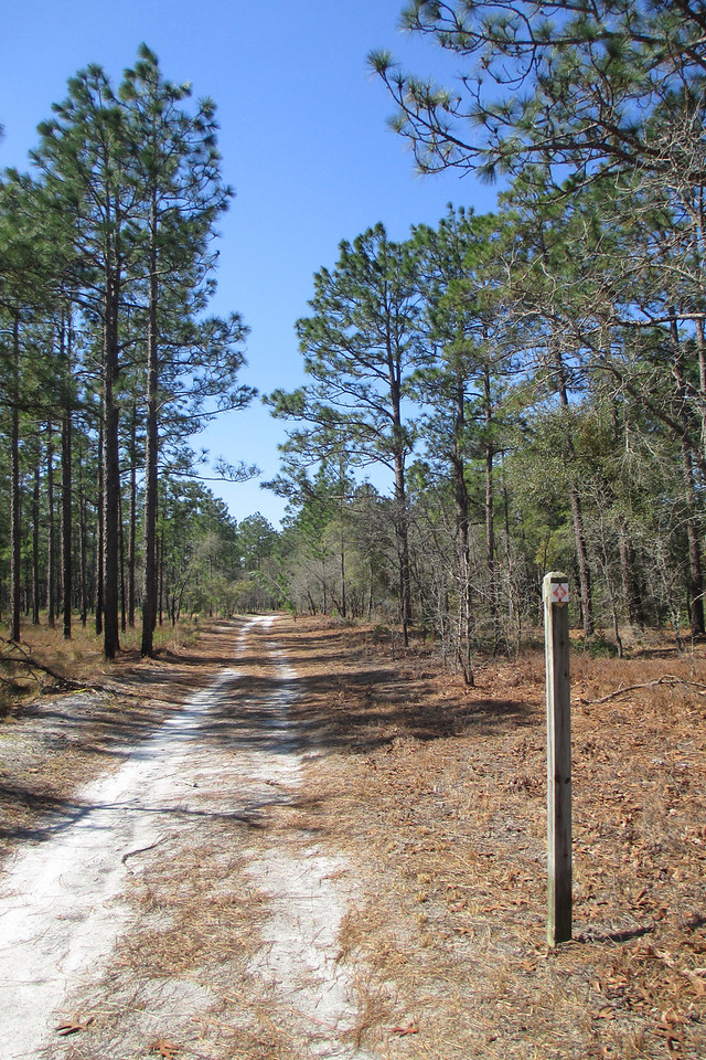 Pinewoods Trail