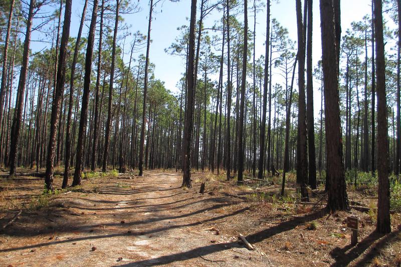 Loblolly Trail