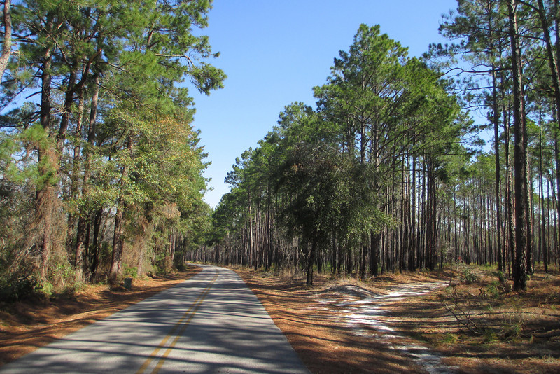 Loblolly Trail