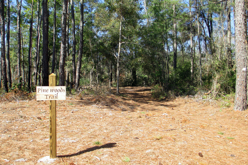 Loblolly-Pinewoods Trail Junction