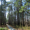 The beginning of our five mile loop began alongside the visitor center on the paved path which led into the pines...