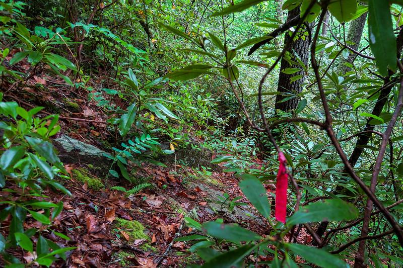 Maple Spring Branch-Auger Fork Bushwhack