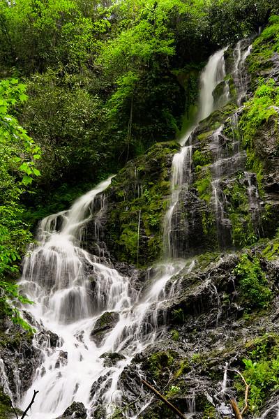 Gorges State Park - Maple Spring Branch & Auger Fork Falls  (5.5 miles; d=7.70)