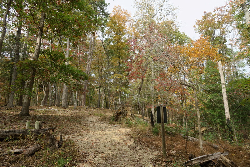 Morrow Mountain-Laurel Trail Junction