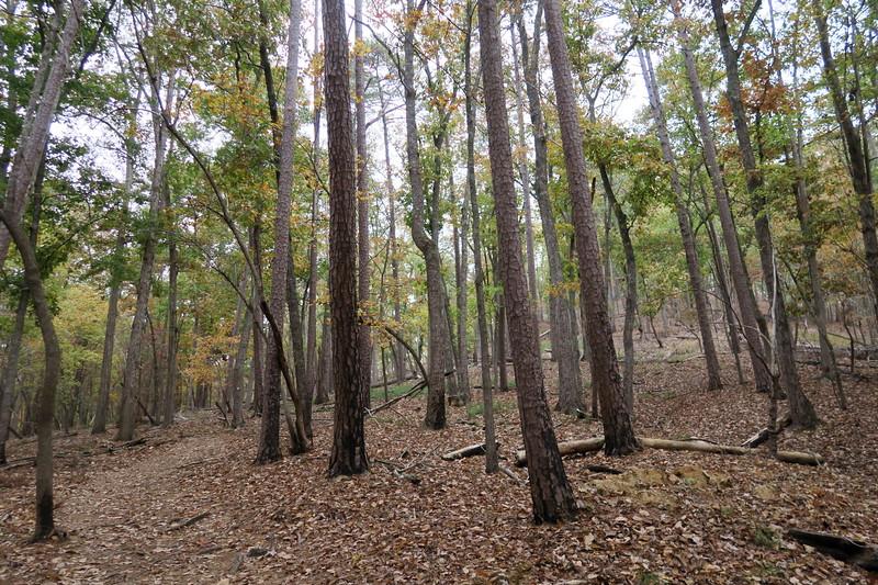 Morrow Mountain Trail