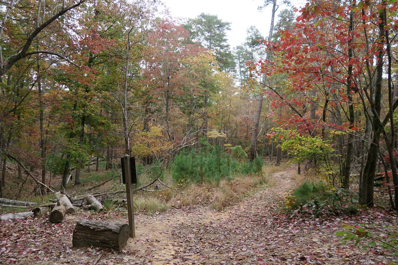 Sugarloaf-Morrow Mountain Trail Junction