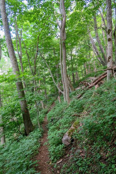 Mountain Ridge Trail -- 4,200'