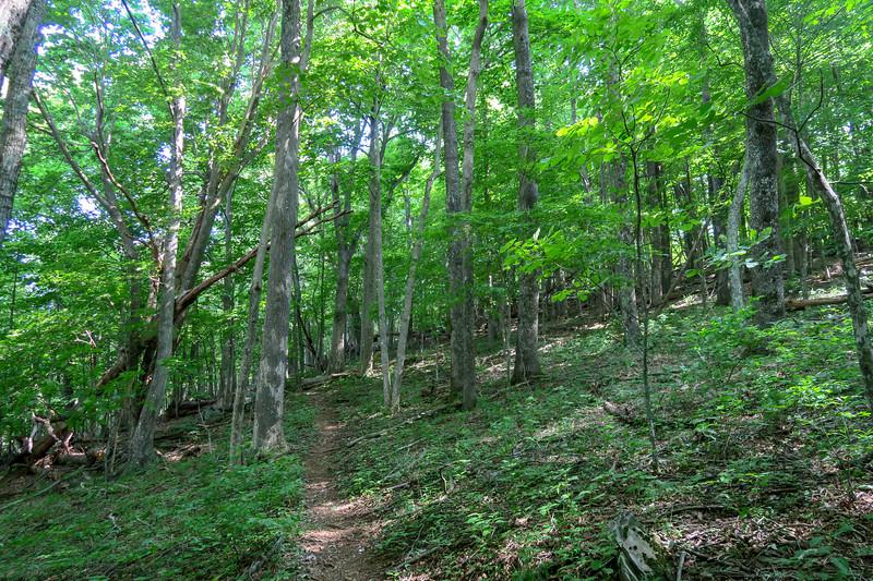 Mountain Ridge Trail -- 3,820'