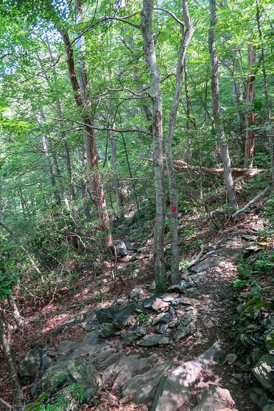 Mountain Ridge Trail-Sunset Overlook Spur Junction -- 4,100'