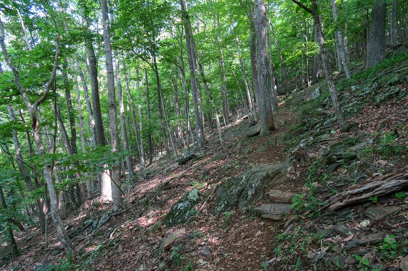 Mountain Ridge Trail -- 3,900'