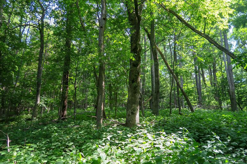 Mountain Ridge Trail -- 4,050'