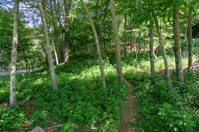 Mountain Ridge Trail -- 4,100'