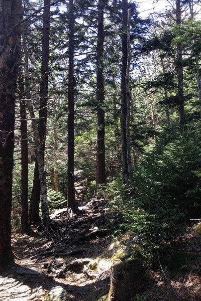 Mount Mitchell Trail - 5,850'