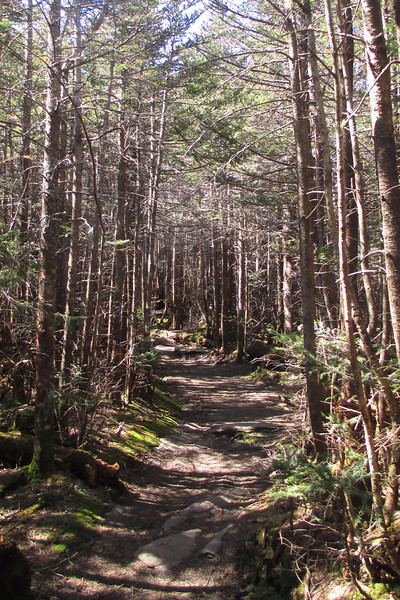 Mount Mitchell Trail - 6,570'